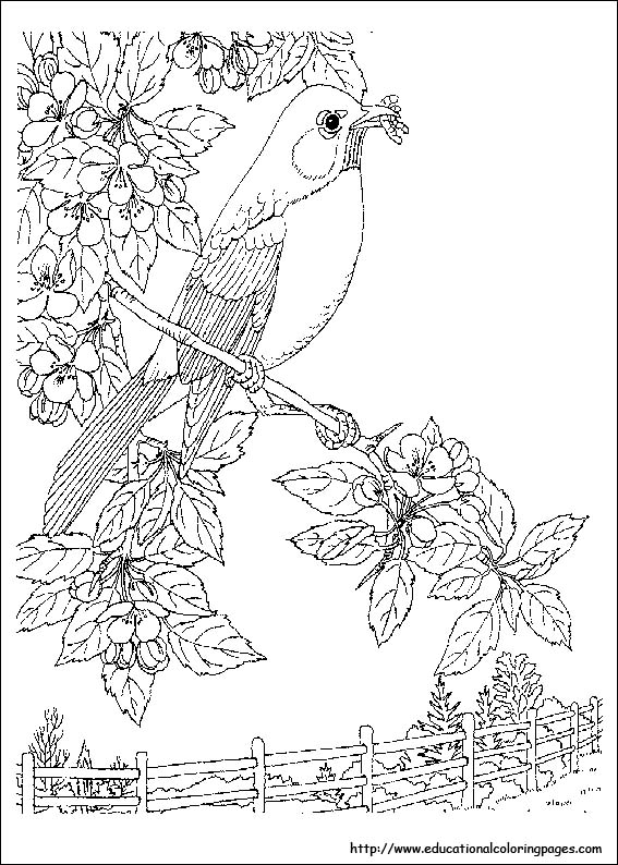 free printable coloring pages nature coloring pages custom search