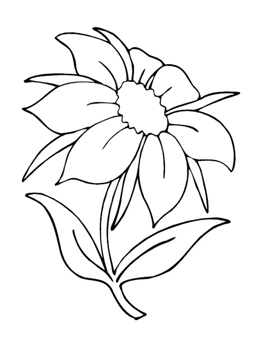 These flowers coloring pages suitable for toddlers preschool and